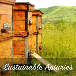 sustainable beekeeping apiaries