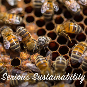 serious sustainable beekeeping